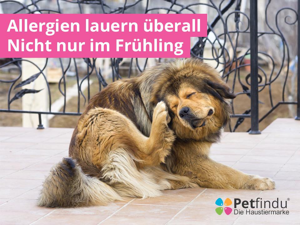 Allergien_bei_Hunden