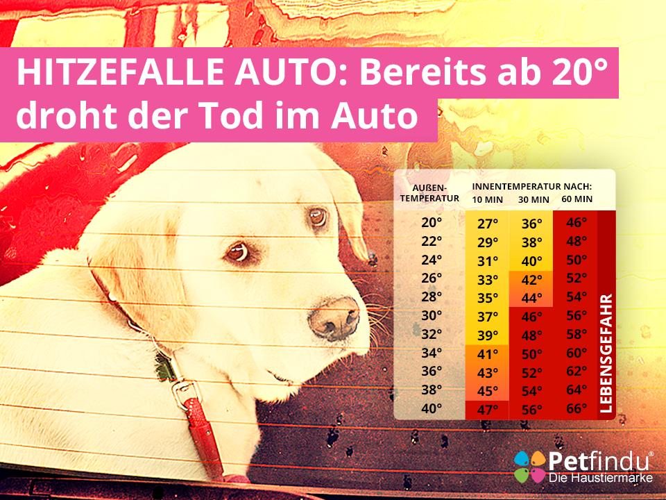 Auto_Hund_Hitze_Gefahr_Tot