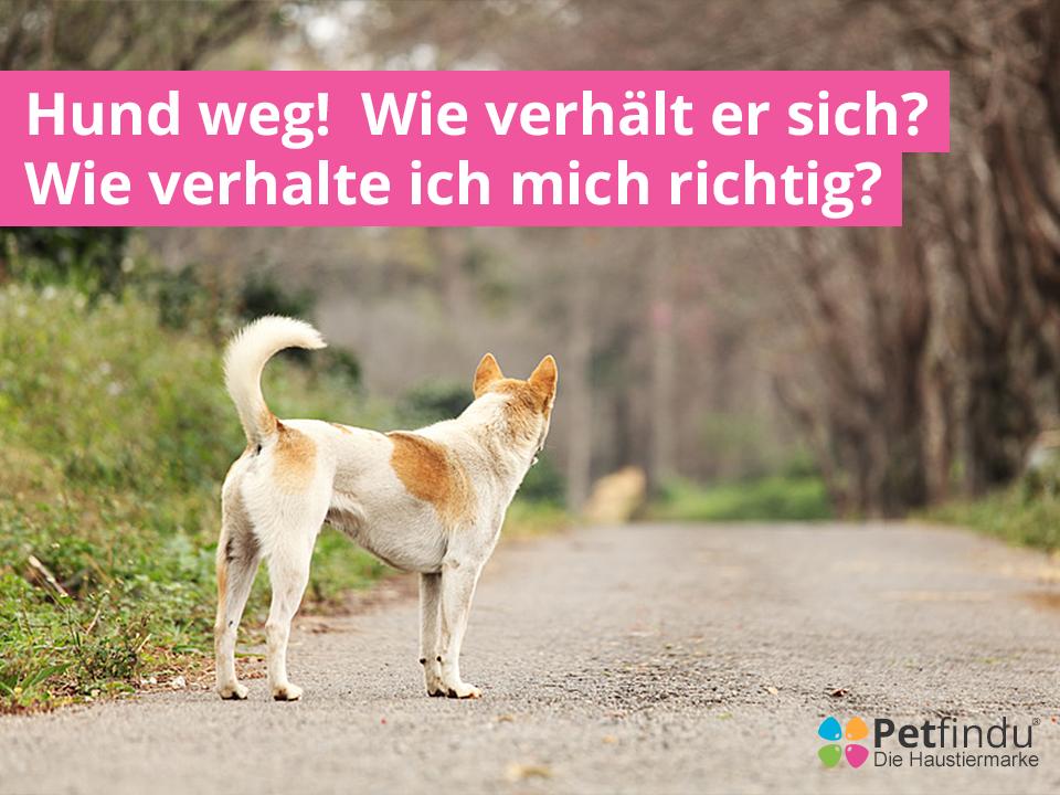 Facebookblog_Hundweg