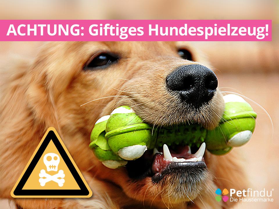 Giftiges Hundespielzeug