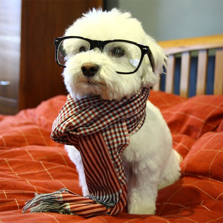 Hipster-Dog-Nickel-Throwback