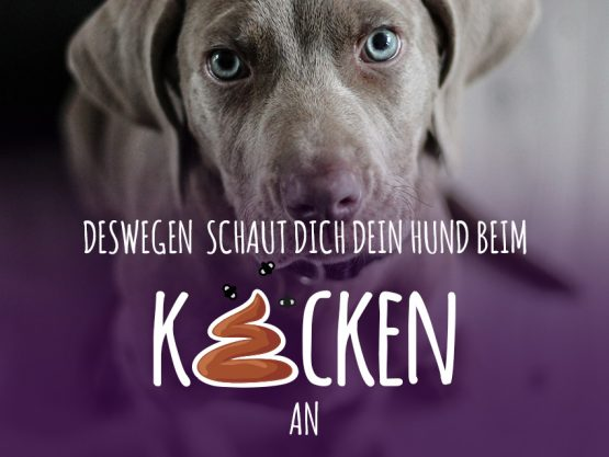 Hund_kacken