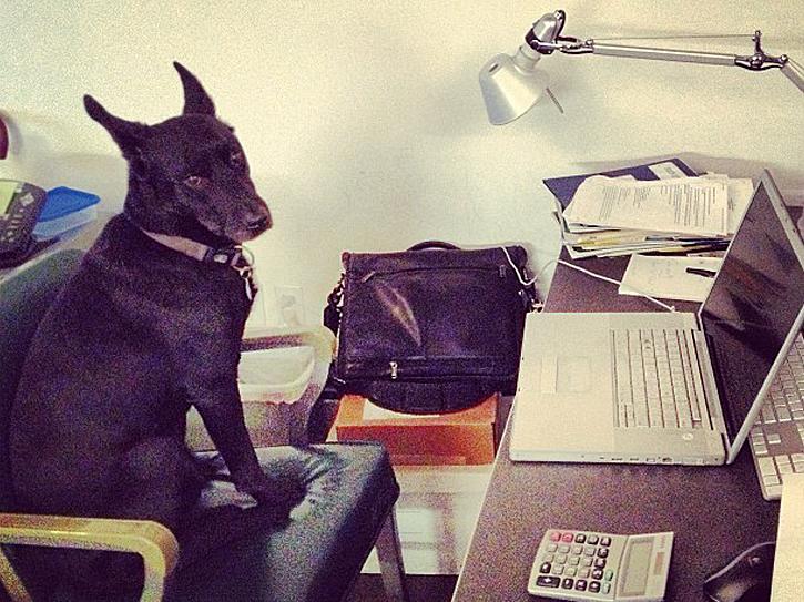 Hunde_am_Arbeitsplatz_1
