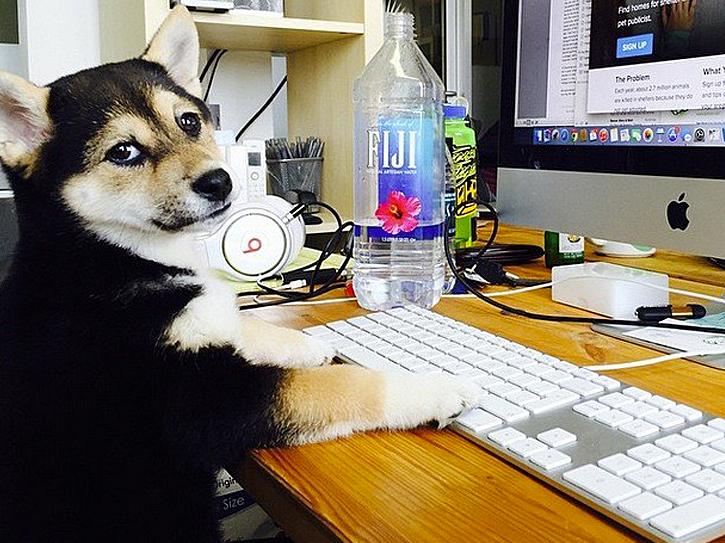 Hunde_am_Arbeitsplatz_3