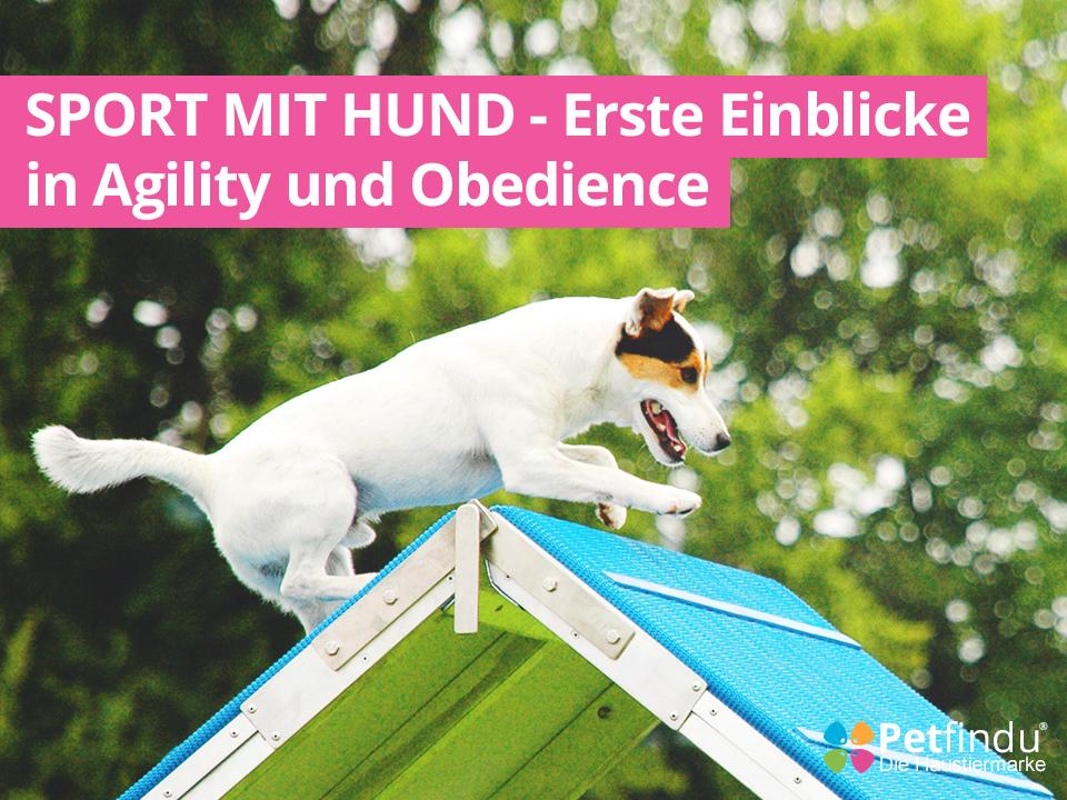 Sport mit Hund - Erste Einblicke in Agility und Obedience
