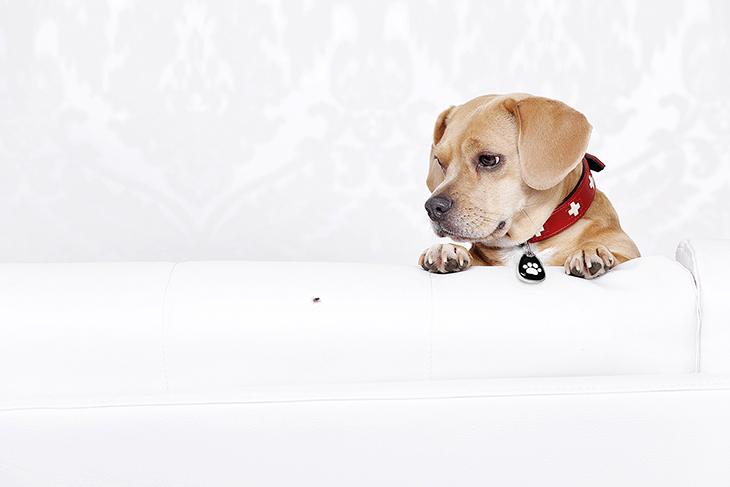 Puggle Petfindu Fotoshooting QR-Code Marke Adressanhänger
