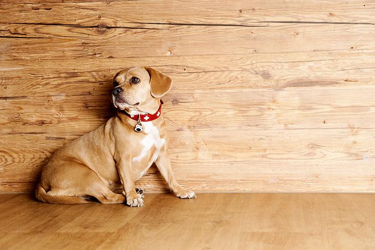 Petfindu süßer Hund Fotoshooting Adressmarke