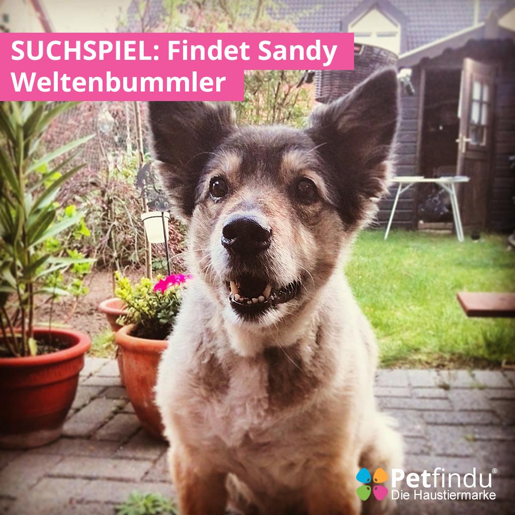 Sandy_Petfindu_gefunden_gesucht
