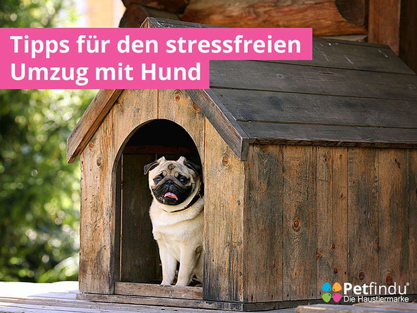 tipps f r den stressfreien umzug mit hund petfindu blog. Black Bedroom Furniture Sets. Home Design Ideas