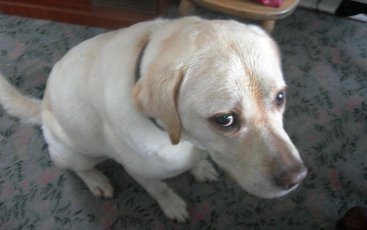 Unterwuerfiger_Hund