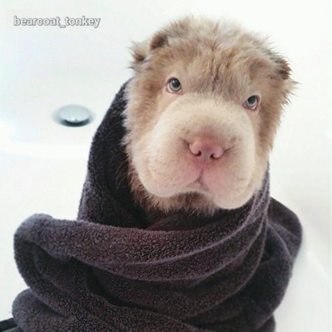 bearcoattonkey