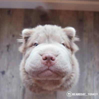 bearcoattonkey_4