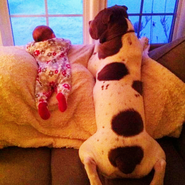 funny-dog-pictures-027-010
