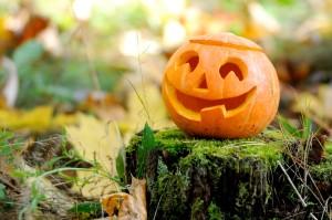 Petfindu Hundemarke Haustiermarke mit Tipps zu Halloween