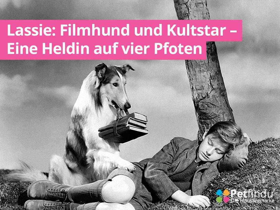 Lassie: Filmhund und Kultstar - Eine Heldin auf vier Pfoten