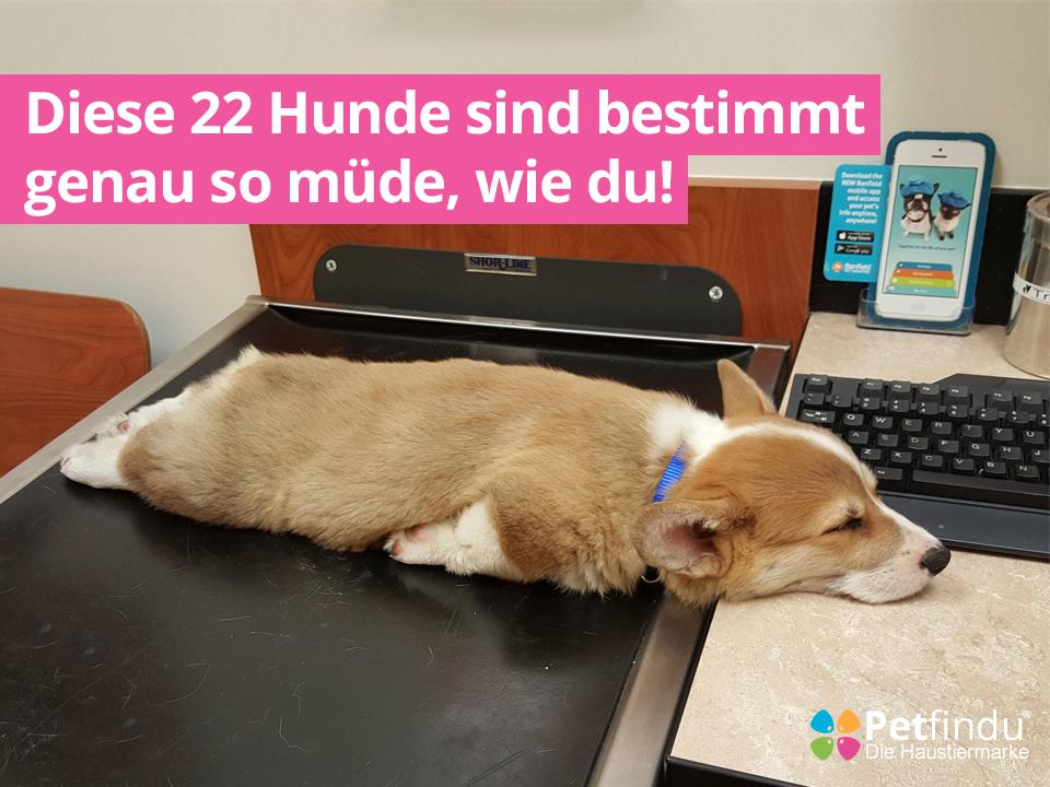 Diese Hunde sind genau so müde, wie du!