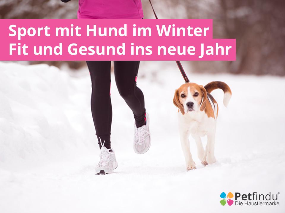 sport_mit_hund_fit_und_gesund_ins_neue_jahr